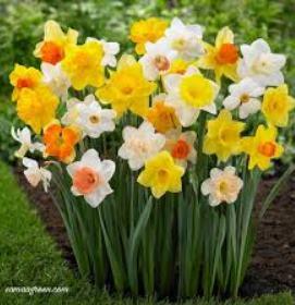اهنگ گل سوسن و لاله عزیزم سیزده ساله